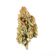 Your Highness Flower Orange Creamsicle